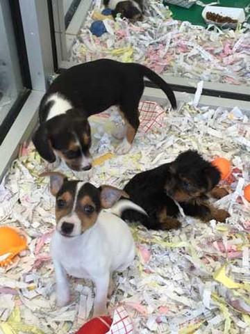 Long Island's best puppies!